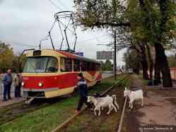 http://transphoto.ru/photo/05/44/64/544646_s.jpg