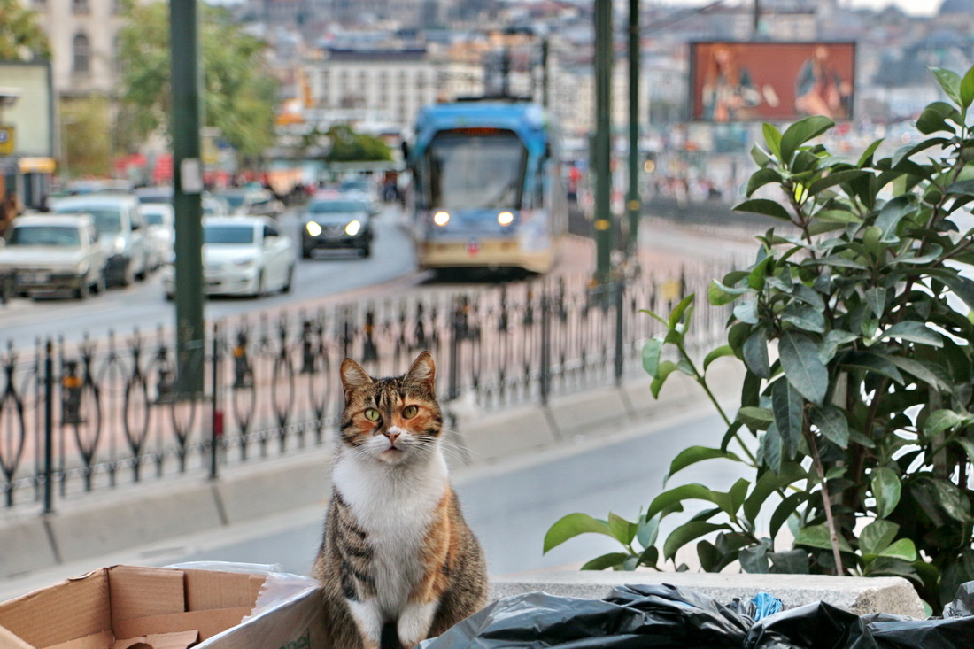 Istanbul — Modern tram T1/T2 — Miscellaneous photos; Transport and animals (Istanbul)